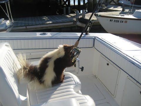 how-to-get-skunked-fishing-the-right-way-pillar-point-half-moon-bay