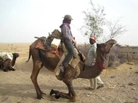Camel Sitting Down Jaisalmer Rajasthan India Youtube