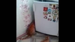 Наглый Котэ сколько не корми всё равно в холодильник лезть будет:)....