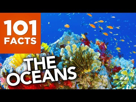 101 Facts About The Oceans