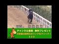マーチステークス(GIII) クリノスターオー調教動画 「競馬レース結果ハイライト」…