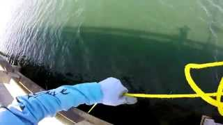 Sunshine Skyway Bridge Goliath Grouper Handline EXTREME Fishing