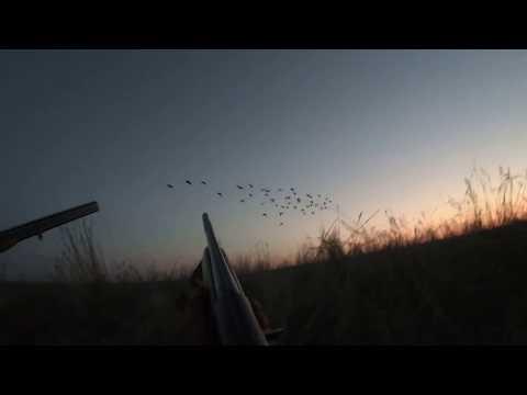 Охота на гусей нам понравилось 04 2020