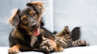 Самые смешные животные Приколы с котами и собаками 2021 10