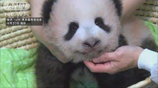 先週、生後100日を迎えた東京・上野動物園の赤ちゃんパンダの名前が25日...