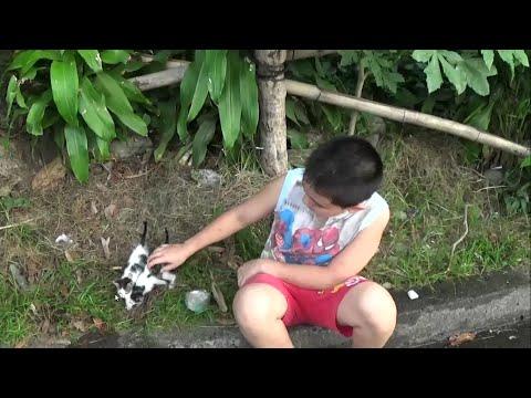 Kitten Rescue in Matina