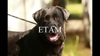 SPA de Bergerac - Chien a adopter - Adopt a dog - ETAM 553