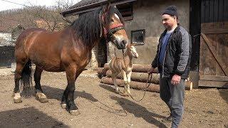In vizita la ferma domnului Vasile de la Treznea, Salaj - 2019