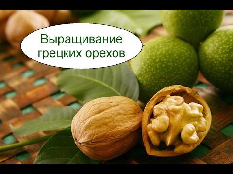 Как хранить грецкие орехи в домашних условиях секреты