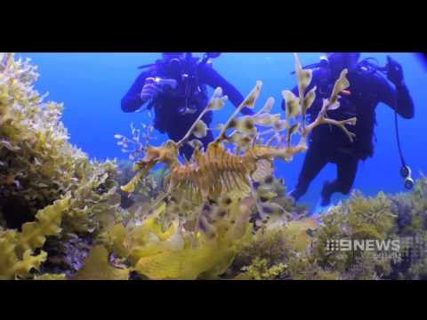 Underwater Attractions | 9 News Adelaide