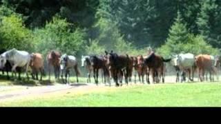 Ein Pferd erzählt