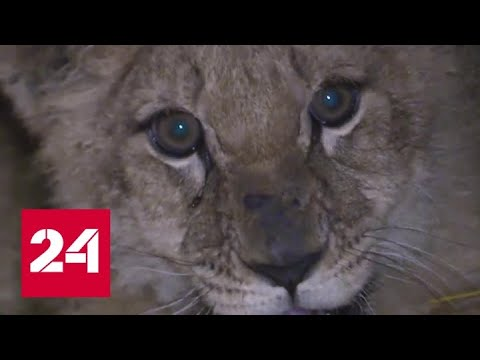 Сквозь взрывы удалось сохранить зоопарк в маленьком поселке под Донецком - Россия 24