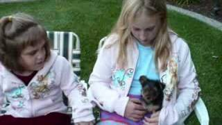 Yorkie Puppy - Dog Training Care