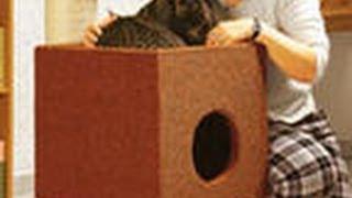 Как сделать дом для кота