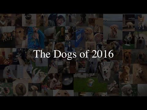 The Dogs of 2016