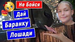 Не Бойся, Дай баранку лошади, Конюшня в Сочи, Конный спорт, Дети Сочи 2020, Смайли, Smile, 717