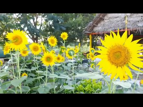 Chennai யை கலக்கும் organic இளைஞர்கள் - Legacy of Nammalvar Ayya | Organic farming IT guys