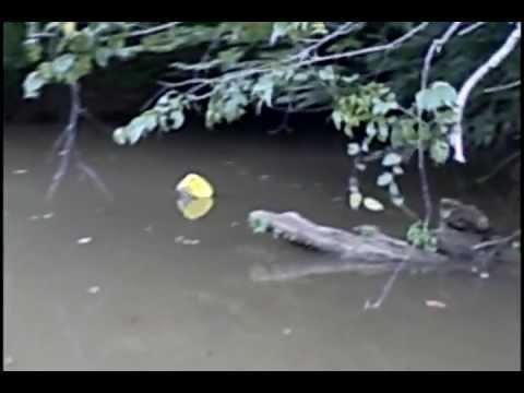 Jug Fishing on Stevens Creek, South Carolina