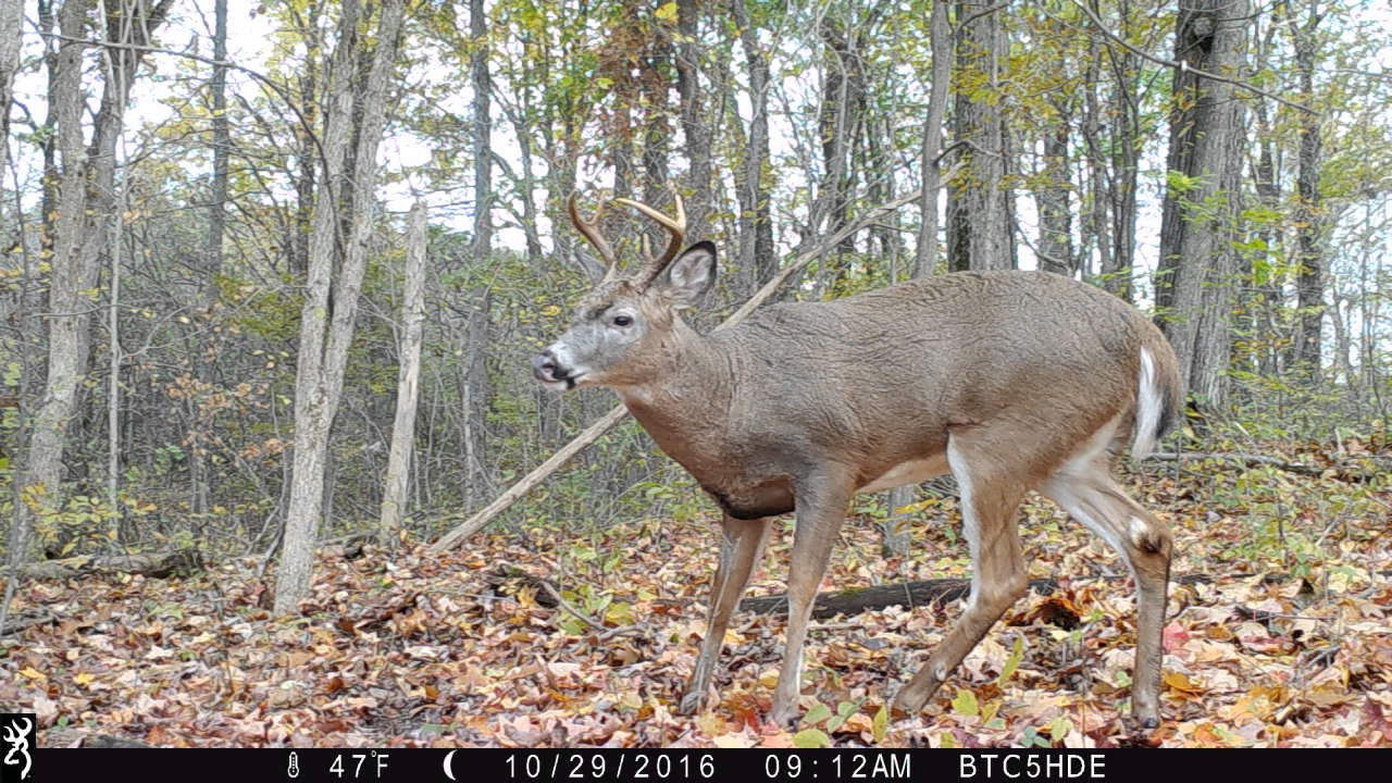 Trail Camera Reviews - YouTube