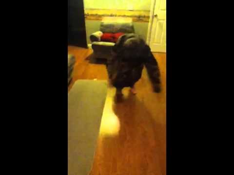 Funny hoodie trick!! - YouTube