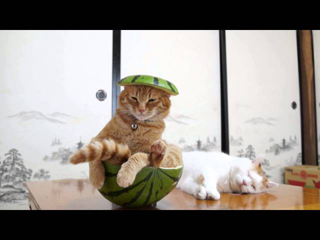 すいか猫 Cat with Watermelon- 2015#2