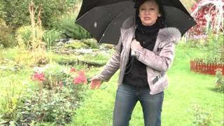 видео Какие цветы я сажаю на даче, чтобы они цвели всё лето — многолетние и однолетние растения в моём саду