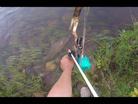 Bowfishing Big Carp (The Spawn Is On)