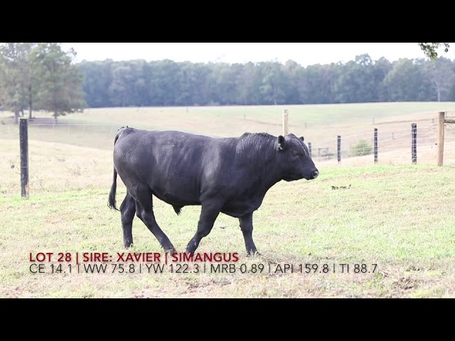 Edgewood Angus Lot 28