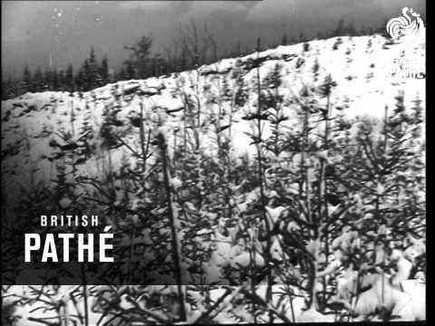 Ski Races In Szklarska Poreba AKA Ski Races (1948)