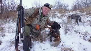 Первая охота на фазана, по снегу, 16 год. First pheasant hunting, snow, 2016.
