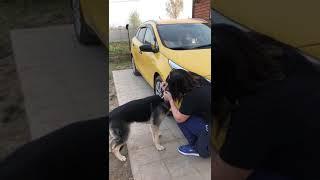 Анфиса - щенок-подросток ищет добрые руки!