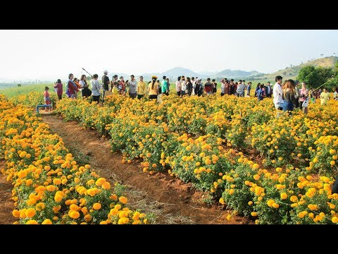 Visit Flower park in Pailin province - Travel in Cambodia