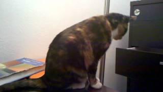 Cat Falls Off Desk