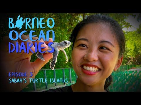 Video Of The Week | Sabah's Turtle Islands - the best in SE Asia [4K] | Borneo Ocean Diaries (S01E05) | SZtv