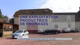 Été 2018 : Actualité riche en émotions dans les Yvelines
