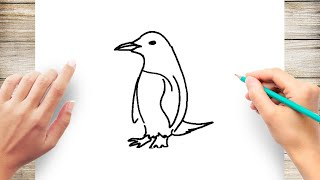 How to Draw Penguin Step by Step Easy for Beginner