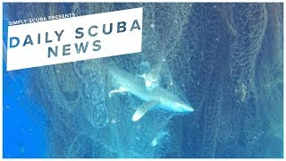 Daily Scuba News - Dead Sharks And Fish Found In Massive Ghost Net
