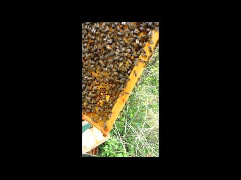 Beekeeping Basics - How To Spring Clean a Beehive