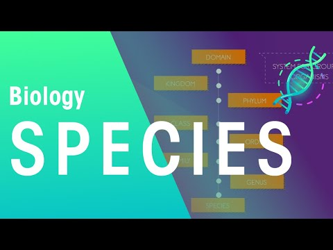 What Is A Species? | Biology for All | FuseSchool