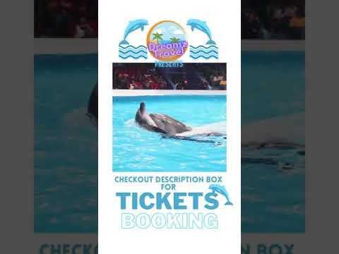 Dubai Dolphinarium#shorts # Best of Dubai Dolphin Show # Dolphin Show # Swim With Dolphins # Dreamz