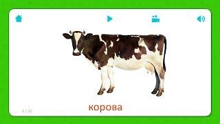 Корова - Карточки Для Детей - Домашние Животные - Карточки Домана