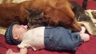 坊ちゃん、嬢ちゃんはうちらが守る!赤ちゃんの守護者と化した犬や猫たち総集編