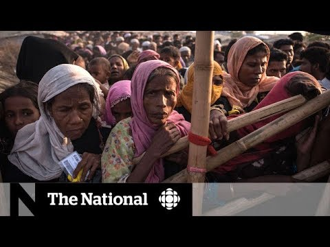 Rohingya refugee crisis: Nahlah Ayed's reporter's notebook