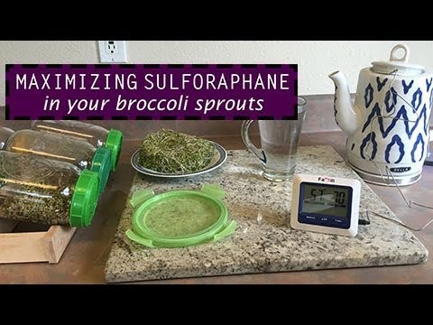 How To Increase Sulforaphane in Broccoli Sprouts by ~3.5-fold