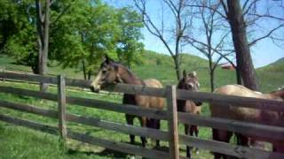 Mountain horse herd meeting Charm April 18th, 2010
