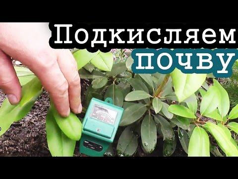 Как подкислить почву для комнатных растений лимонной кислотой