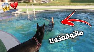 مقلب سويت نفسي غرقان بالمسبح على كلبتي لوسي وأذكى كلب بالعالم !!