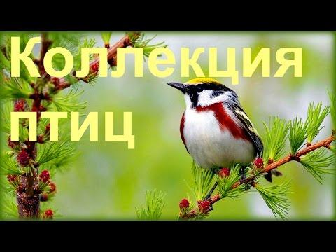 1 Час - Незабываемое Пение Лесных Птиц  Forest Birds Singing