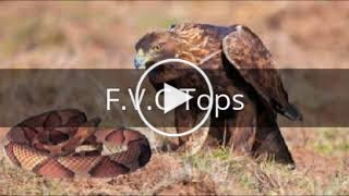 Nat Geo Wild Nature Documentary Wildlife Animal Discovery Channel Animals # 2017HD 2