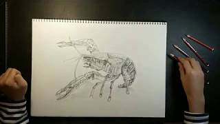 Drawing A Lobster - Time Lapse